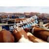 西门塔尔牛苗买卖在王成牲畜交易部小牛崽种苗