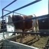 华北牲畜交易中心-牲畜种苗基地